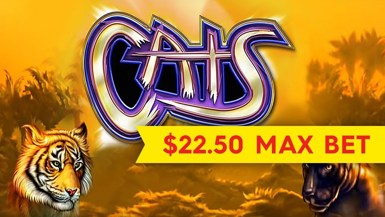 Cats and Cash - 61528